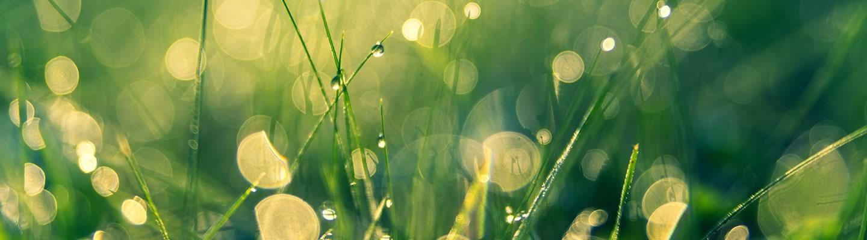 Eco Nice | Solució eco sostenible per a la neteja i desinfecció